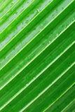 liść palma Obrazy Royalty Free