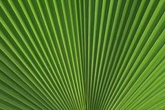 liść palma Obraz Stock