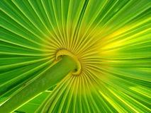 liść palma Zdjęcie Stock