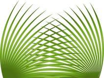 liść palma royalty ilustracja