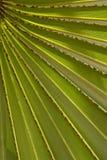 liść palmy wzór Obrazy Stock