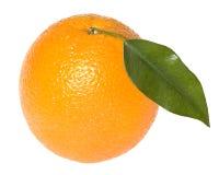 liść pomarańcze zdjęcia royalty free