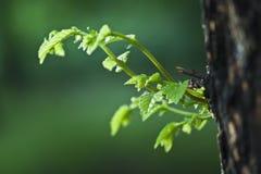 liść popołudniowy świeży światło słoneczne Zdjęcia Stock