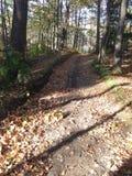 Liść posypująca ścieżka w lesie fotografia royalty free