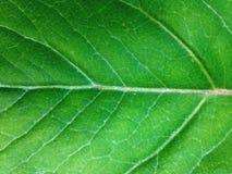 Liść przy tło teksturą Obraz Stock