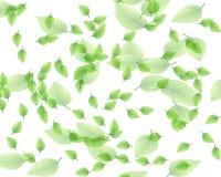 liść przypadkowy deseniowy Fotografia Royalty Free