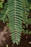 Liść roślina Zdjęcia Royalty Free