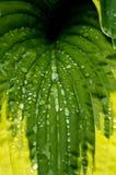 liść rośliny Zdjęcia Stock