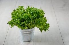 Liść sałatka w wiadrze Obrazy Royalty Free