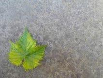 liść samotny Fotografia Stock