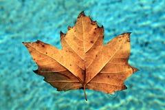 liść spławowa woda Obrazy Royalty Free
