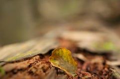 Liść spadał na lasowej ściółce, życie blisko dna fotografia royalty free