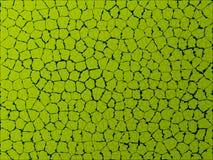 liść tekstura Fotografia Stock