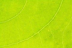 Liść tekstura, liścia tło Fotografia Stock