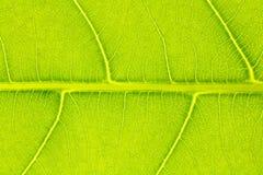 Liść tekstura, liścia tło Zdjęcia Royalty Free