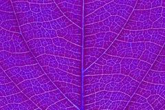 Liść tekstura, liścia tło Zdjęcia Stock
