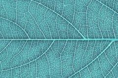 Liść tekstura, liścia tło Obrazy Royalty Free