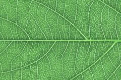 Liść tekstura lub liścia tło dla projekta Obrazy Royalty Free