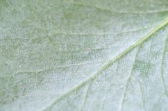 Liść tekstura lub liścia tło obraz royalty free