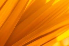 Liść tekstura w ciepłym brzmieniu dla abstrakcjonistycznego tła obrazy stock