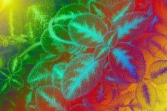 Liść tekstury wzór dla wiosny tła środowiska i ekologii pojęcia projekta Zdjęcie Royalty Free