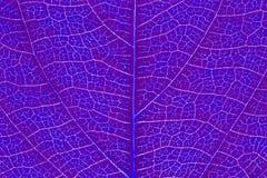 Liść tekstury wzór dla wiosny tła środowiska i ekologii pojęcia projekta Zdjęcia Royalty Free