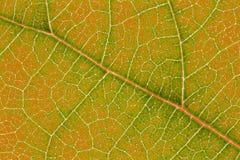 Liść tekstury wzór dla wiosny tła środowiska i ekologii pojęcia projekta Zdjęcie Stock