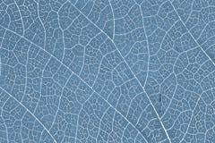 Liść tekstury wzoru tło dla graficznego projekta Zdjęcie Royalty Free