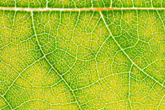 Liść tekstury wzoru tło dla graficznego projekta Obraz Royalty Free