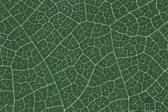 Liść tekstury wzoru tło dla graficznego projekta Obrazy Royalty Free