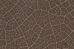 Liść tekstury wzoru tło dla graficznego projekta Zdjęcie Stock