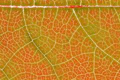Liść tekstury wzoru tło dla graficznego projekta Fotografia Royalty Free