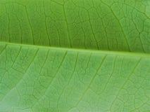 Liść tekstury zielonego koloru ściany tło zdjęcie stock