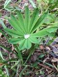 Liść trawa z rosa kroplami fotografia royalty free