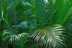 Liść Tropikalne rośliny Forest Green Wypełnia Pogodnego tło obrazy stock