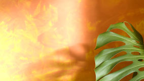 liść tropikalny las deszczowy zdjęcie royalty free
