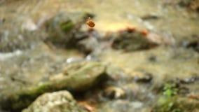 Liść unosi się nad strumień zdjęcie wideo