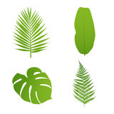 liść ustawiają tropikalnego Palma, banan, paproć, monstera Obrazy Royalty Free