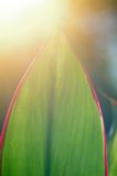 Liść w świetle Obraz Royalty Free