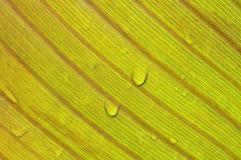 Liść w deszczu Zdjęcia Stock