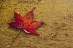 Liść w deszczu Obraz Stock