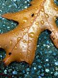 Liść w deszczu Obrazy Royalty Free