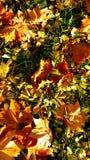 Liść w jesień Zdjęcia Stock