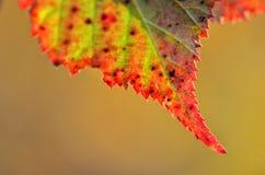 Liść w jesień kolorach zdjęcia royalty free