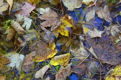 Liść w jesieni wodzie Obraz Royalty Free
