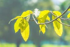 Liść w ogródzie Zdjęcie Stock