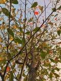 Liść w parku Zdjęcie Stock