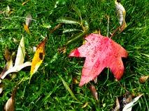 Liść w trawie obraz royalty free