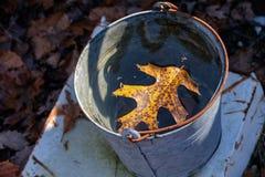 Liść w wiadrze zdjęcie stock