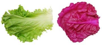 liść warzywo Zdjęcia Royalty Free